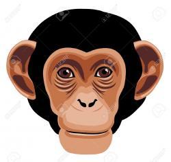 Chimpanzee clipart ape