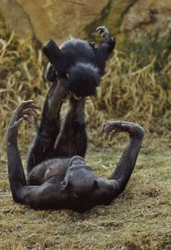 Bonobo clipart baboon