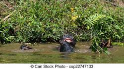 Bonobo clipart hippo