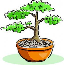 Bonsai clipart