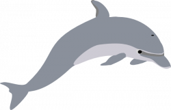Spinner Dolphin clipart ikan