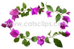 Bouganvillea clipart Flowers Clipart
