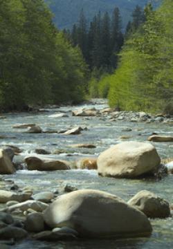 River clipart wilderness