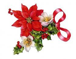 Poinsettia clipart beautiful christmas
