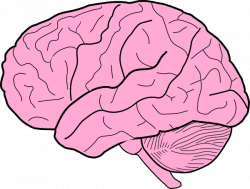 Drawn brain