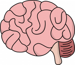 Brains clipart transparent