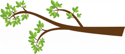 Leaves clipart tree branch
