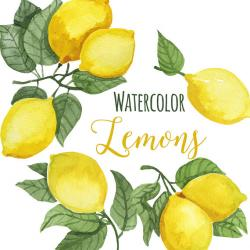 Lemon clipart branch