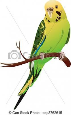 Budgie clipart green