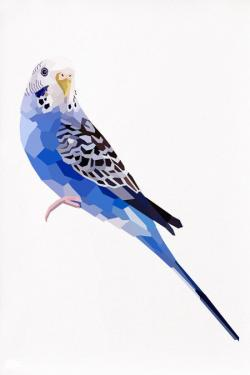 Budgerigar clipart blue