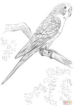 Drawn parakeet colouring page