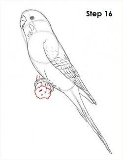 Drawn parakeet hand drawn