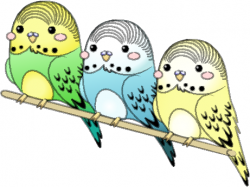 Budgie clipart animated