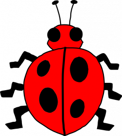 Lady Beetle clipart insect