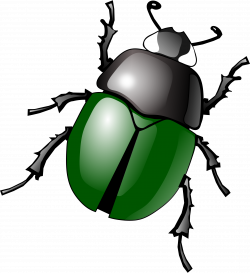 Beatle clipart insect