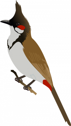 Red Headed Finch clipart bulbul