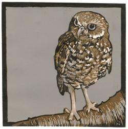 Burrowing Owl clipart color print