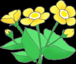 Buttercup clipart