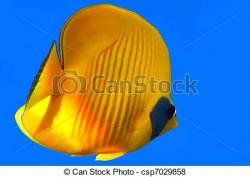 Butterflyfish clipart masked