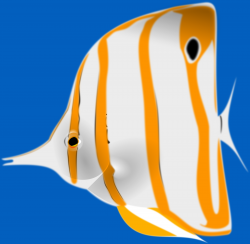 Butterflyfish clipart reef fish