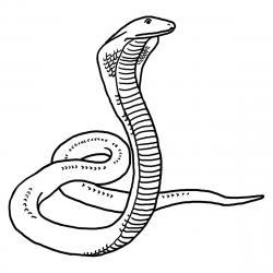 Cobra clipart reptile