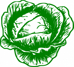Cauliflower clipart sayuran