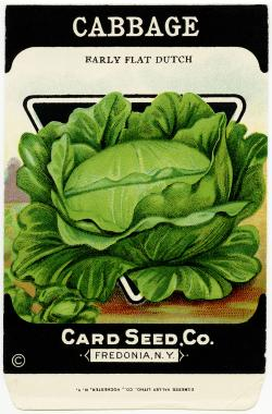 Cabbage clipart vege