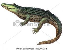 Drawn crocodile caiman