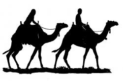 Shaow clipart camel