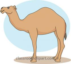 Camels clipart easy