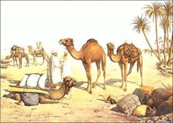 Travel clipart camel
