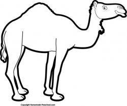 Drawn camels nativity