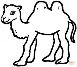 Drawn camels baby camel