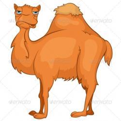 Camels clipart grumpy