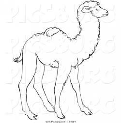 Drawn camel