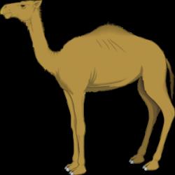 Lama clipart camel