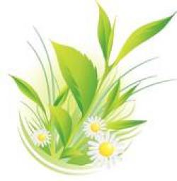 Camomile clipart natural