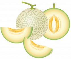 Honey Dew Melon clipart