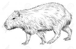 Capybara clipart black and white