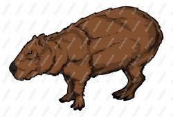 Capybara clipart cartoon