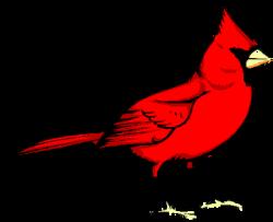 Cardinal clipart