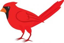 Realistic clipart cardinal bird