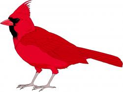 Realistic clipart red cardinal