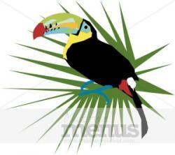 Exotic clipart caribbean