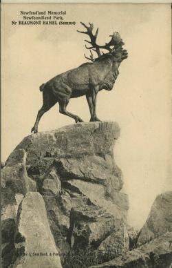 Caribou clipart newfoundland