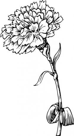 Stem clipart carnation flower