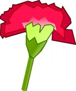 Carnation clipart vector