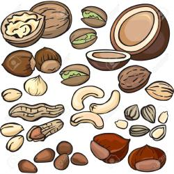 Almond clipart nut seed