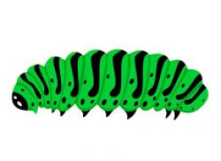 Caterpillar clipart insect