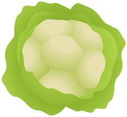 Cauliflower clipart free food